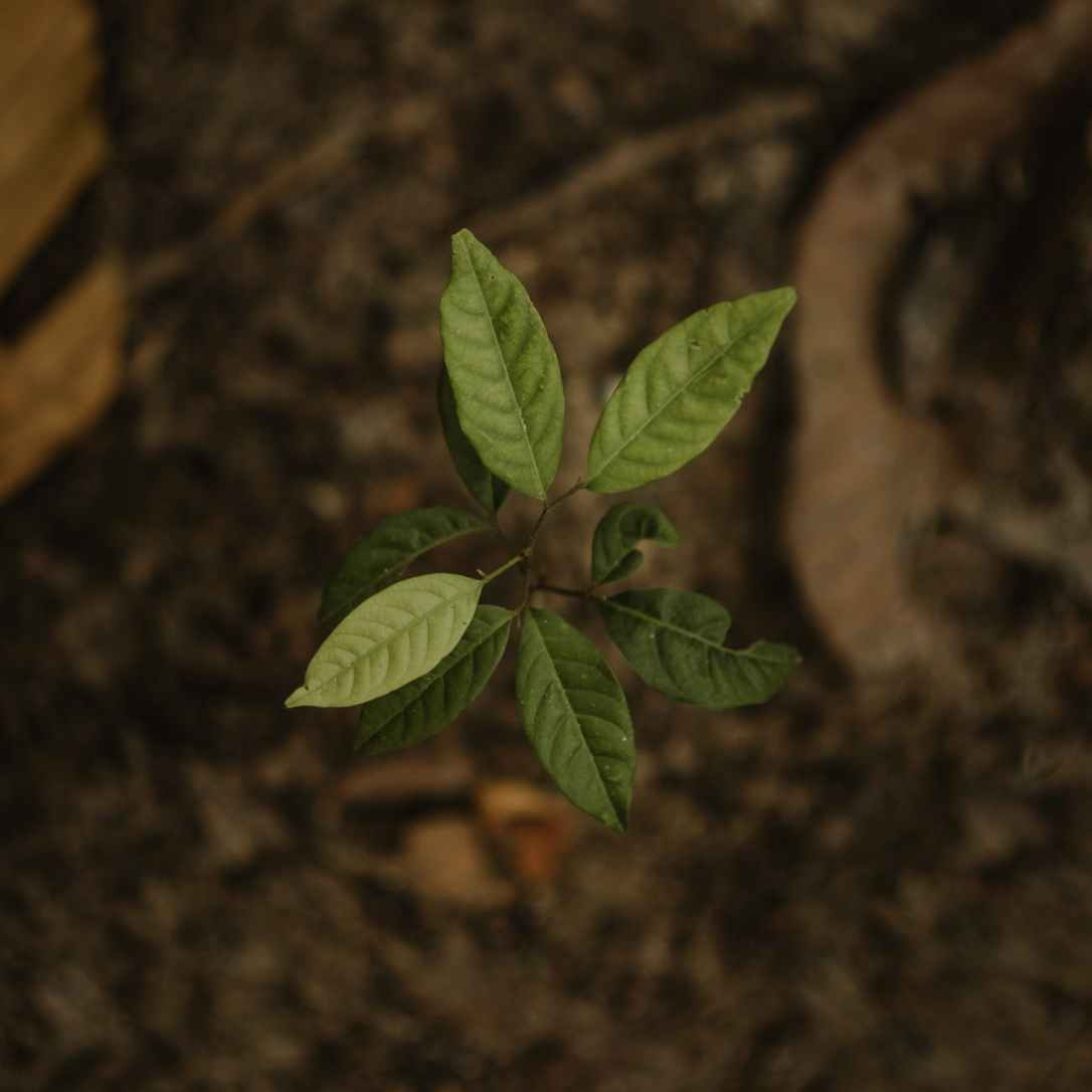 close up photo of green seedling
