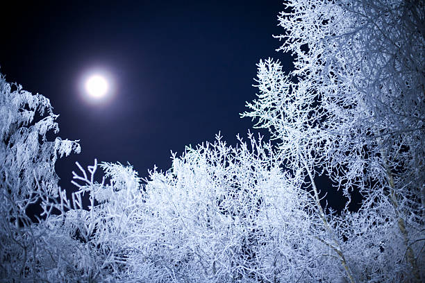 Moon light in winter forest.